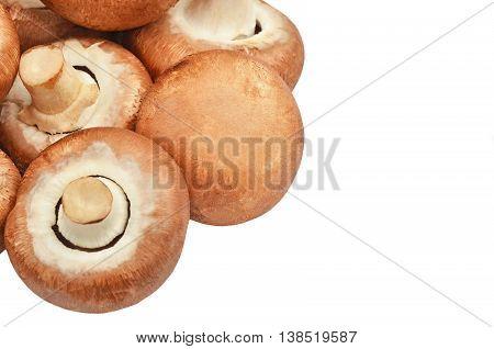 Champignon (true Mushroom)