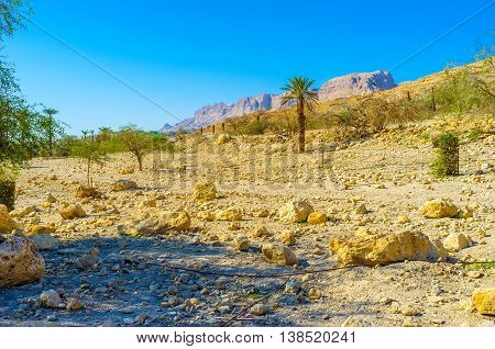 The dry soil of Judean desert with the poor vegetation next to Ein Gedi Nature Reserve Israel.