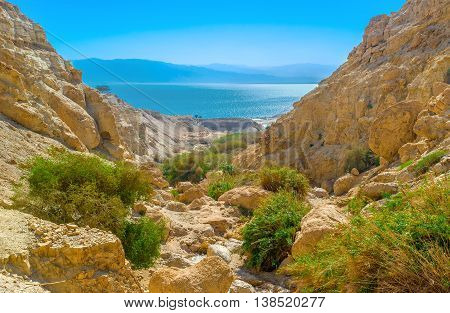 The green oasis in gorge among the Judean desert with the Dead Sea on background Israel.