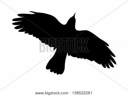 bird concept art illustration , bird icon vector