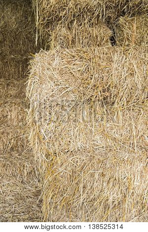 Dry yellow hay grass closeup texture Background