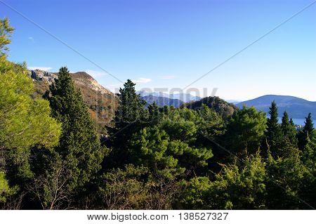 Mountain landscape with green pine forest on a cloudless day