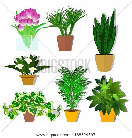 Set of indoor plants, beautiful flowers for interior plants for decoration vector illustration