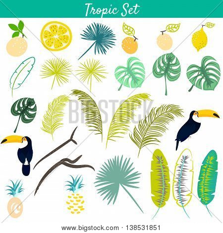 Tropic clipart vector set. Toucan birds, pineapples, jungle and banana leaves. Monstera palm tree branches.