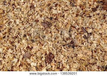Background of fresh wood shavings. Texture of the shavings from cutting and sawing trees. Rudiment of billets of firewood in the forest.