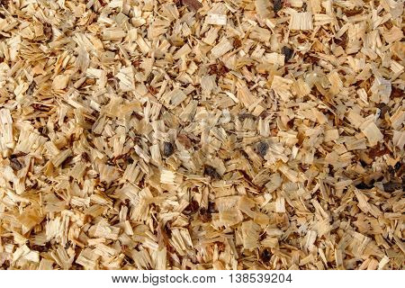 Background of fresh wood shavings. The texture of the shavings from cutting and sawing trees. Rudiment of billets of firewood in the forest.