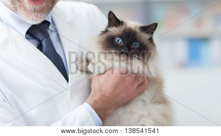 Beautiful cat at the veterinary clinic a doctor is holding and cuddling it pet care concept