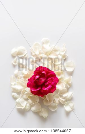 Rose petals on white background with space for your text