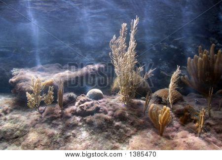 Tanque de Coral Caribe