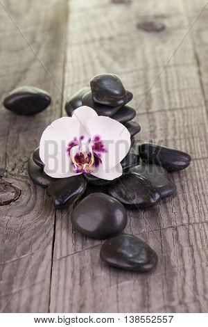 White Phalaenopsis orchid and black stones on weathered wood