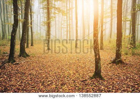 Autumn forest with leaves on the ground