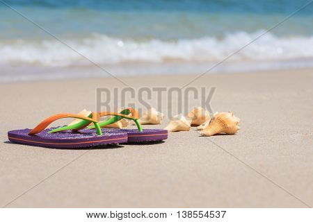 Flip-flops and conch shell on sandy beach