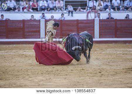 Pozoblanco Spain - September 24 2010: The Spanish Bullfighter El Fundi bullfighting with the crutch in the Bullring of Pozoblanco Spain