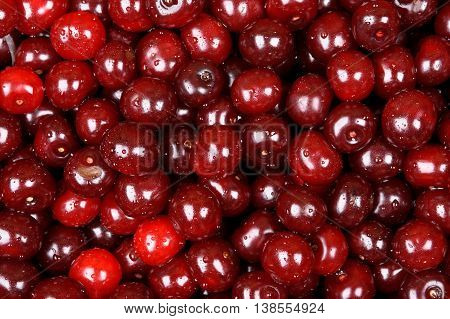 Close Up Background Of Fresh Cherries With Water Drops