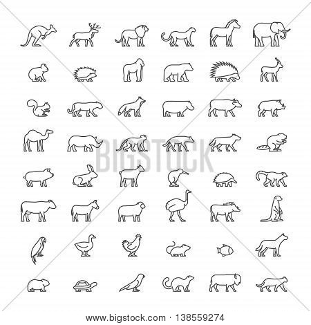 Line set of silhouettes of australian african american and other animals. Vector icon monkey beaver pig kiwi lemur cow chicken and others. Open path.
