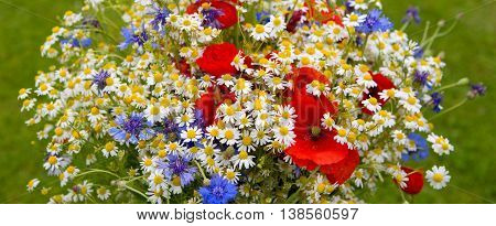 Wild flower bouquet with poppies daisies and cornflowers. Wild flowers isolated on green background.