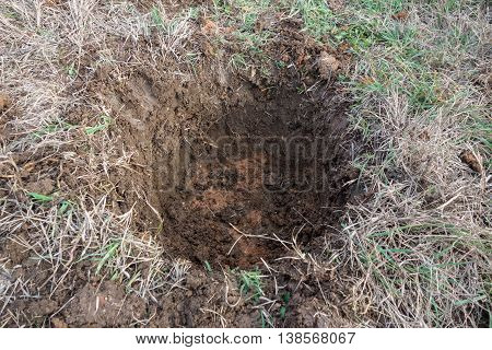 Opened hole in the ground for planting tree