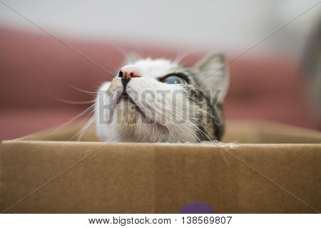 young cat playing in the cardboard box