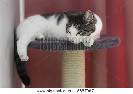 cat relaxing on the cat's plush house