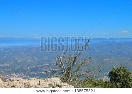The picture was taken in the spring in Spain. The picture shows the view from the top of the mountain of Montserrat. In the foreground a bush sprouting through the stone.