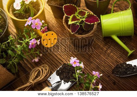 Garden tools and flowers in sunshine