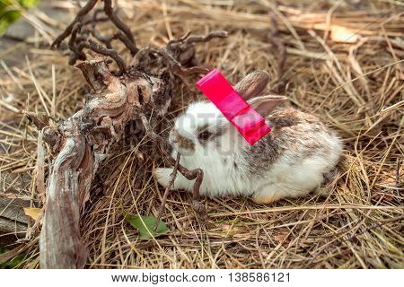 Cute Rabbit With Red Bow