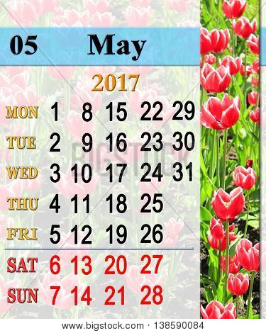 calendar for May 2017 on the background of red tulips on the flower-bed