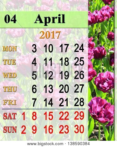 calendar for April 2017 with flower bed of lilac tulips
