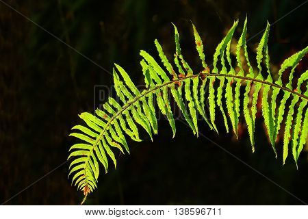 a picture of an exterior Pacific Northwest sword fern
