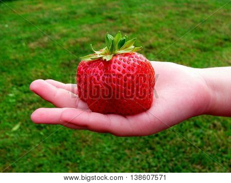 mutant fruits red strawberries in a child's hands