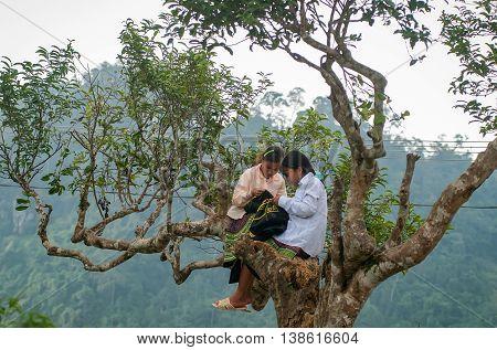 YEN BAI, VIETNAM, March 14, 2016 two ethnic Hmong girl, highland Yen Bai, sitting embroidery, brocade, on the ancient tea trees