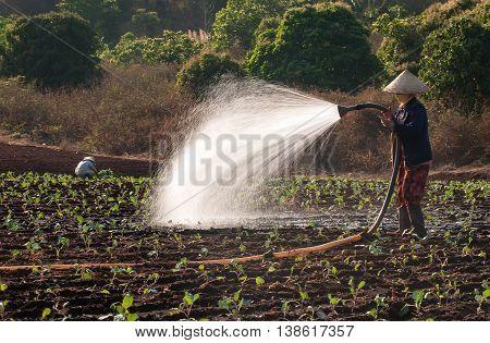 HA GIANG, VIETNAM, February 13, 2016 woman watering, garden vegetables, high mountains, Ha Giang, Vietnam.