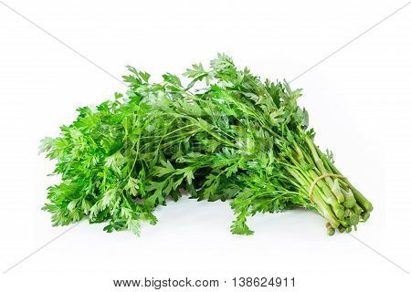 Coriander sprig Used in cooking isolated on white