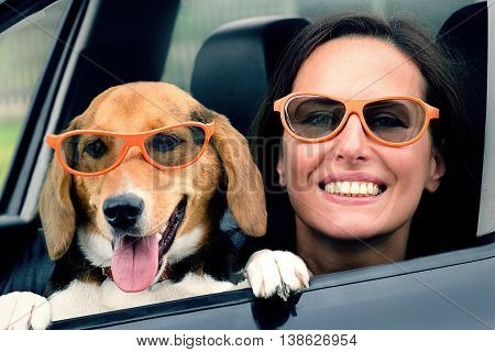 Woman With Beagle Dog In Car.