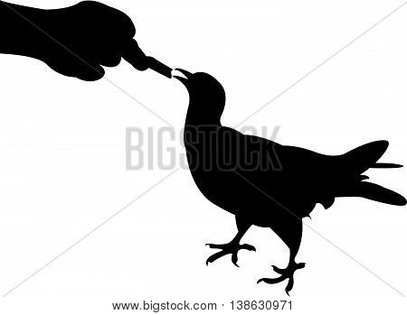 a hand feeding the bird, silhouette vector