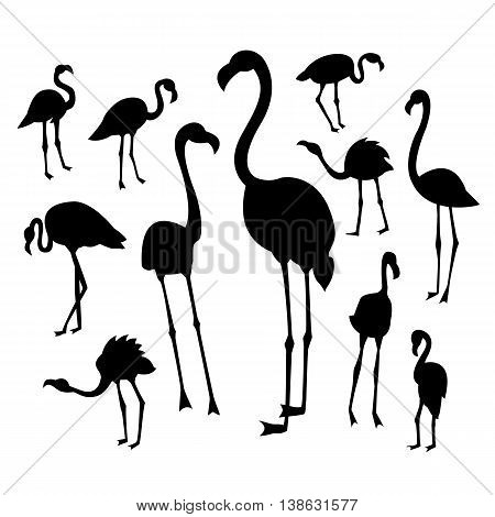 Black flamingo silhouettes on white background in different postures. Vector illustration for your cute design.