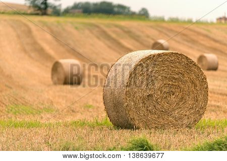 close up hay bale in harvest field
