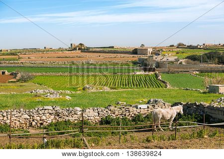 Panorama view on fields and village. Gozo island Malta.