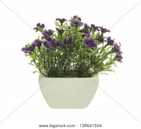Decorative Purple Petunia in a flowerpot isolated on white background.