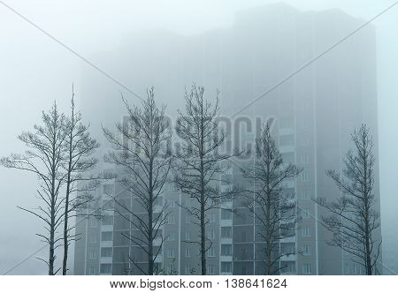 trees and a big house in the autumn mist. in the fog