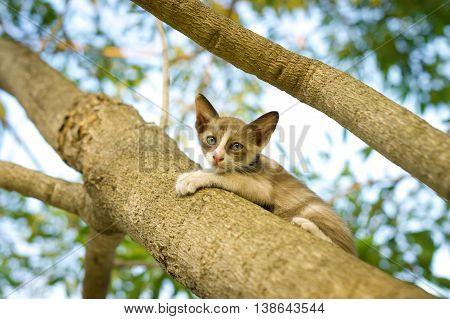 Cute little kitten on the tree in garden. Cat climbing the tree