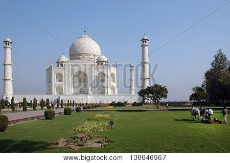 Agra, Utta Pradesh, India - march 07, 2006: Mowing the lawn of the gardens of the Taj Mahal, with a team of cows