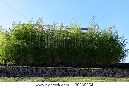 Bamboo Natural Fence covering the house making a fence