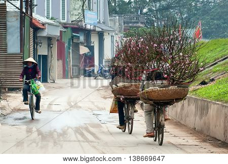 HA NOI, VIET NAM, February 2, 2016 people of Ha Noi, transportation peach blossom, street peddling traditional Lunar New Year