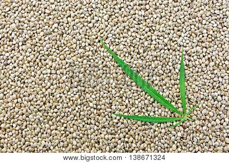 The texture of hemp seed with leaf