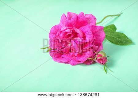 Beautiful Romantic Pink Rose Flower With Bud And Leaf Lies On Green Background, Close Up