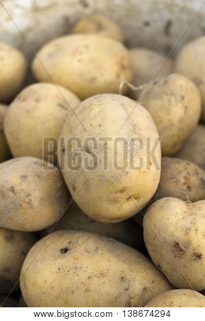 closeup of a organic potatoes - shallow depth of field