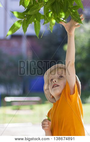 The boy plucks the leaves from the branches of trees