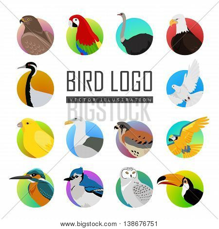 Big set of birds vector logo. Collection of fauna icons for illustrating animal theme. Parrot, ara pigeon hawk eagle toucan, ostrich, kingfisher, gull, owl, jay, falcon, crane, isolated on white.