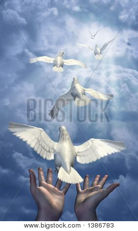 Releasing The Doves